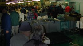 Mercato ittico al Tronchetto - Venezia
